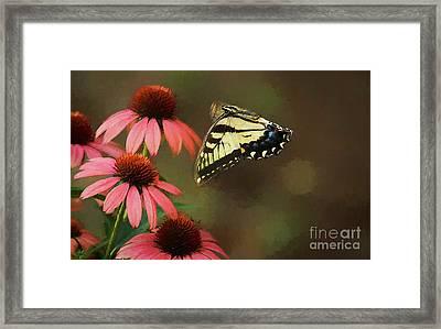 Summer Flight Framed Print by Darren Fisher