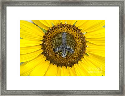 Sunflower Peace Sign Framed Print by James BO  Insogna
