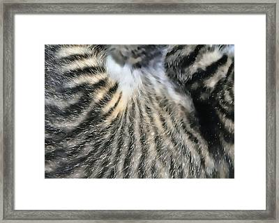 Tabby Texture Framed Print by JAMART Photography