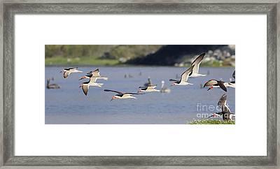 The Birds Framed Print by Marc Bittan
