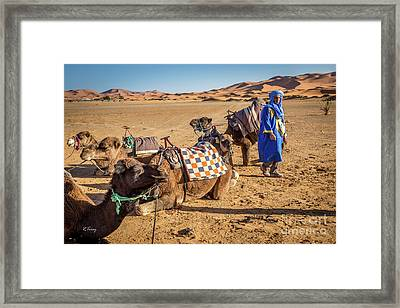The Camel Driver And His Camels Framed Print by Rene Triay Photography