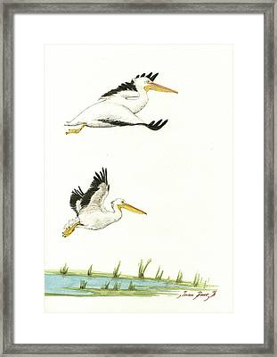 The Fox And The Pelicans Framed Print