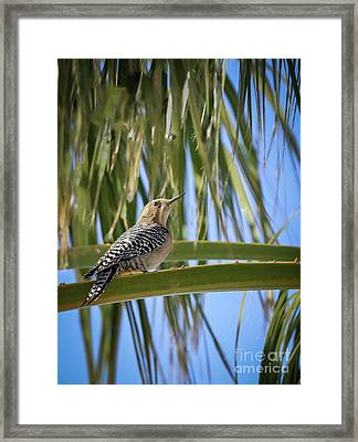 The Gila Framed Print by Robert Bales