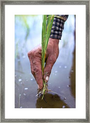 The Good Earth Framed Print by Carl Purcell