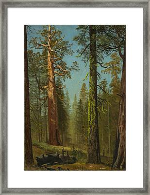 The Grizzly Giant Sequoia, Mariposa Grove, California Framed Print