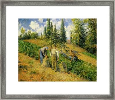 The Harvest, Pontoise Framed Print by Camille Pissarro
