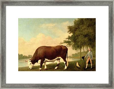 The Lincolnshire Ox Framed Print