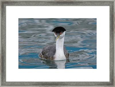 Framed Print featuring the photograph The Look by Fraida Gutovich