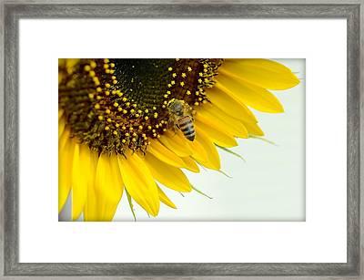 The Pollinator Framed Print by Fraida Gutovich