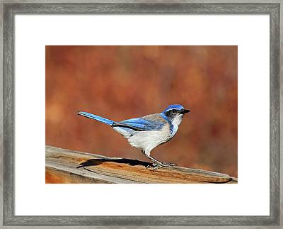 The Poser Framed Print by Donna Kennedy