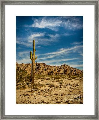 The Saguaro Framed Print by Robert Bales