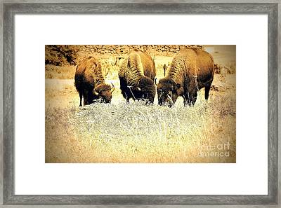 Three Of A Kind Framed Print by Mickey Harkins