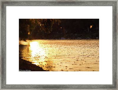 Tisza Mayflies Framed Print by Thubakabra