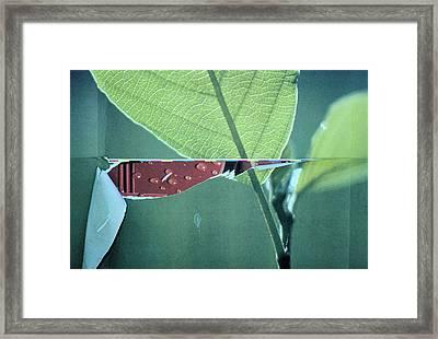 Torn Framed Print by Richard Barone
