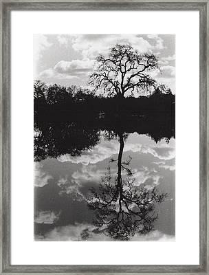 Tree Reflection Sebastopol Ca, Framed Print
