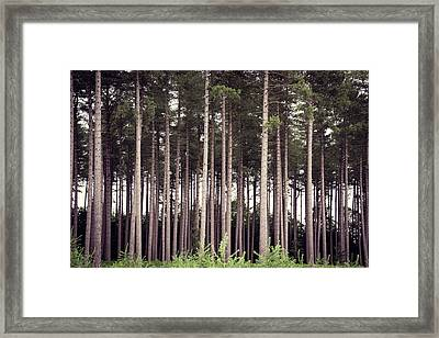Tree Trunks Framed Print