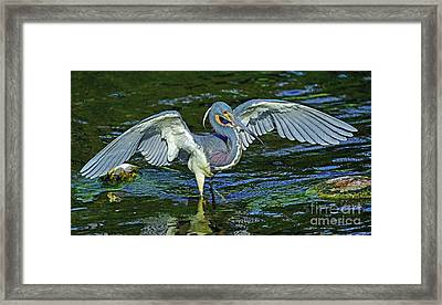 Tricolor Hunting Framed Print