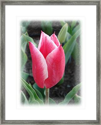 Tulip Framed Print by Tong Steinle