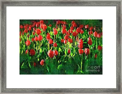 Tulips Framed Print by Hristo Hristov