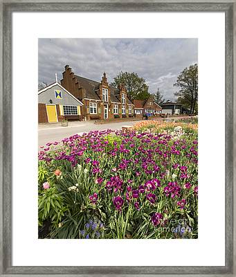 Tulips In Holland Framed Print by Twenty Two North Photography