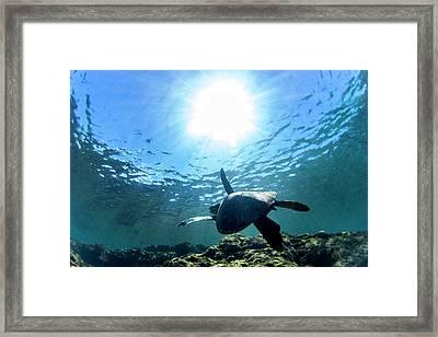 Turtles View Framed Print
