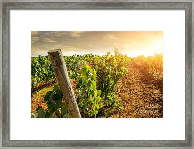 Vineyard Framed Print by Carlos Caetano