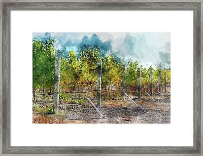 Vineyard In Autumn Framed Print by Brandon Bourdages