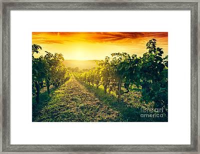 Vineyard In Tuscany, Italy Framed Print