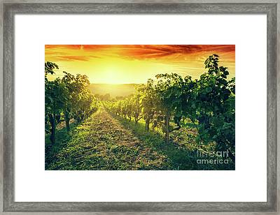 Vineyard In Tuscany, Italy. Wine Farm At Sunset. Vintage Framed Print