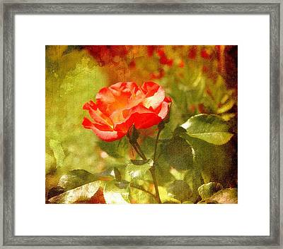 Vintage Rose Framed Print by Cathie Tyler
