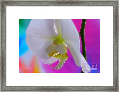 Vivid Joy Framed Print