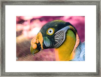 Framed Print featuring the photograph Vulture by Artistic Panda