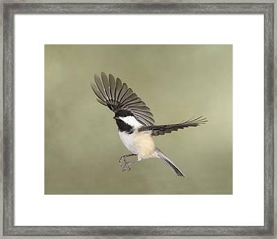 Watchful Eye Framed Print by Gerry Sibell