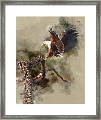 Water Paint African Fish Eagle Landing Framed Print