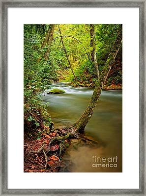 Whatcom Creek Framed Print by Idaho Scenic Images Linda Lantzy