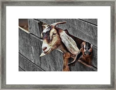 What's Going On? Framed Print by JAMART Photography