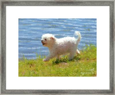 White Little Dog Framed Print by Miroslav Nemecek