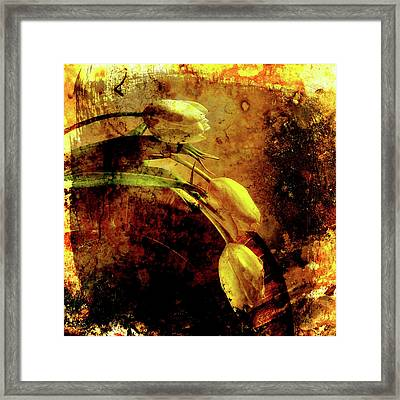 White Tulips Framed Print by Bernard Jaubert