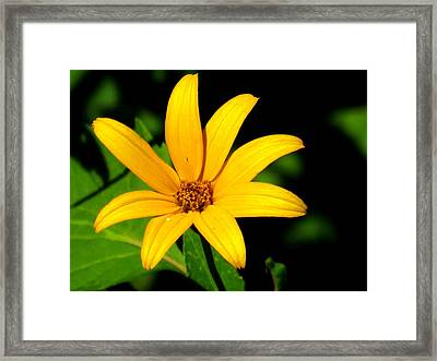 Framed Print featuring the photograph Wild Flower by Eric Switzer