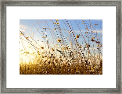 Wild Spikes Framed Print