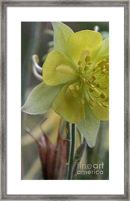 Yellow Flower 4 Framed Print