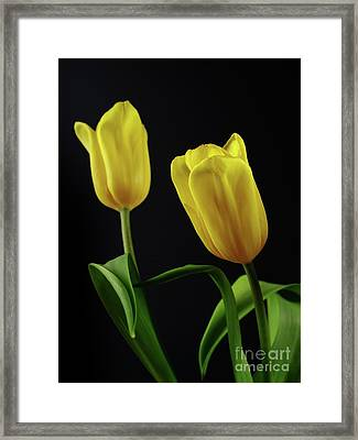 Framed Print featuring the photograph Yellow Tulips by Dariusz Gudowicz