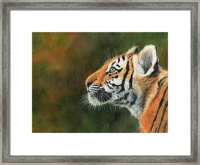 Framed Print featuring the painting Young Amur Tiger  by David Stribbling