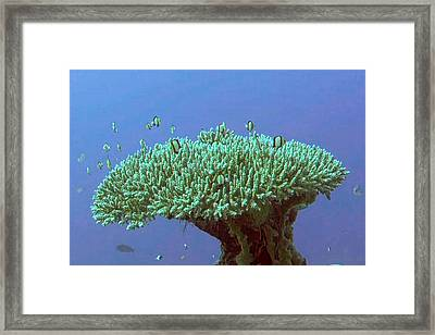 Zanzibar Island Sea  Coral Reef Vegitation Bio Diversity Of Exotic Fish Plants And  Organisims Zanzi Framed Print by Navin Joshi