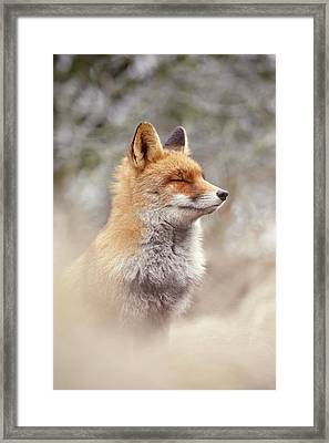 Zen Fox Series - Chill Fox Framed Print