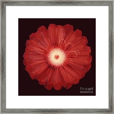 Zinnia Flower, X-ray Framed Print