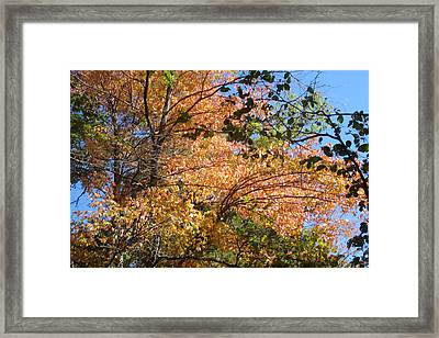 Autumn In Ma Framed Print by Victoria Wang