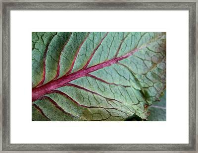 2010 Hydrangea Leaf Close Up 5 Framed Print by Robert Morin