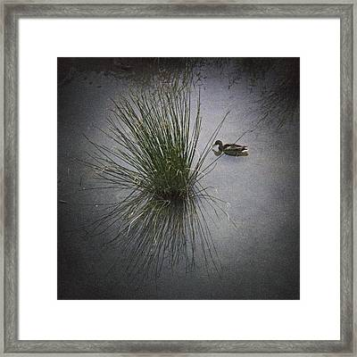 2015 Germano Reale Framed Print