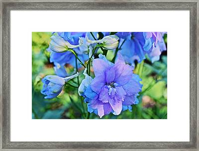 2015 Mid September At The Garden Larkspur 2 Framed Print